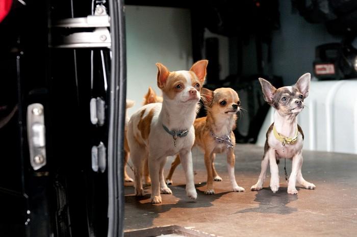 Čivava z Beverly Hills 2 (2011)