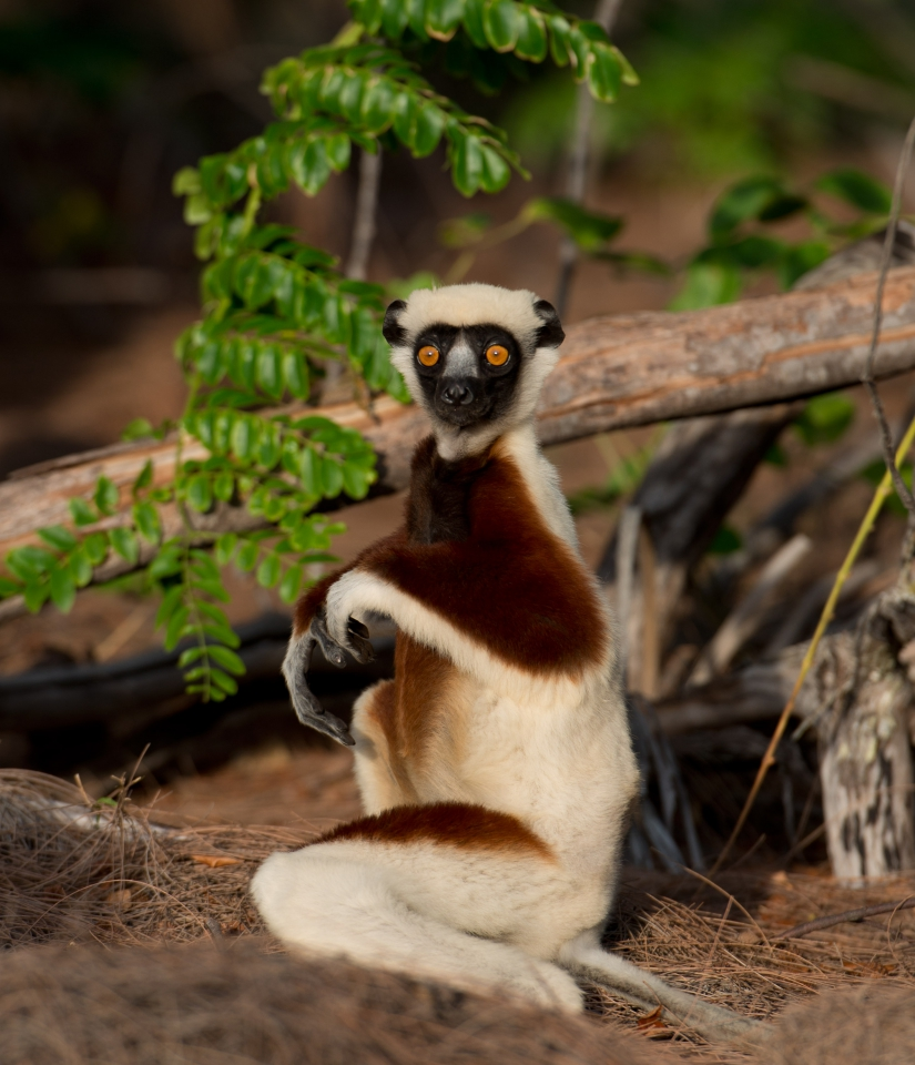 Letní Filmy Které Vás Budou Bavit: Madagaskar: Království Lemurů, Sleduj Filmy Online Zdarma