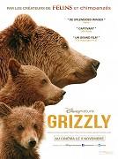 Spustit online film zdarma Medvědi