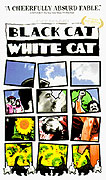 Černá kočka, bílý kocour