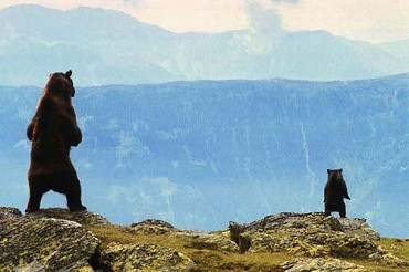 Máša a medveď - omaľovánky   malovanky   Bear …