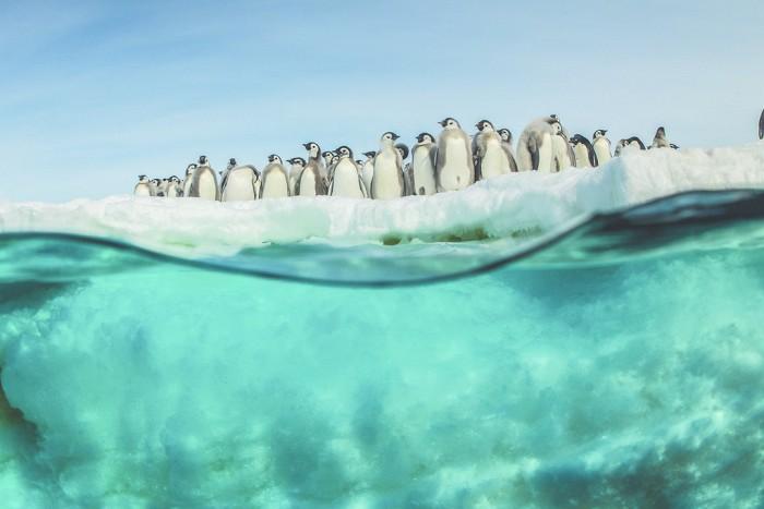 Putovanie tučniakov: Volanie oceánu (2017)