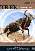 Putování pakoňů očima skrytých kamer _ Trek: Spy on the Wildebeest (2007)