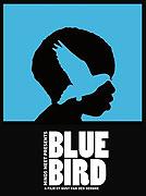 Modrý vták