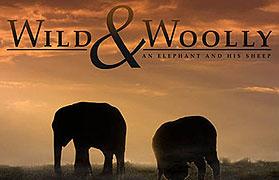 Divoké a chundelatá: Slůně a jeho ovce _ Wild and Woolly - An Elephant and his Sheep (2011)