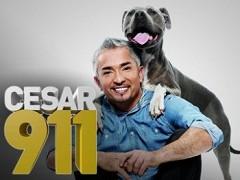 Cesar zachraňuje _ Cesar 911 (2014)