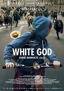Poster k filmu        Bílý Bůh