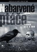 Spustit online film zdarma Nabarvené ptáče