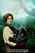 Poster k filmu Gorily v mlze