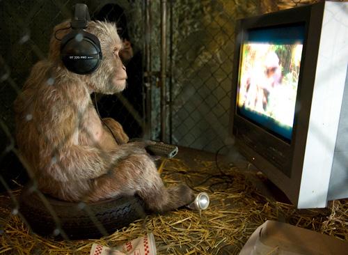 monkey-watching-tv.jpg