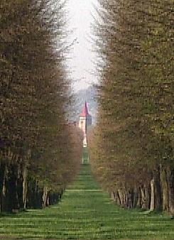 Aleje jako součást naší přírody (2007)