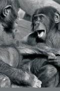Histoire naturelle du rire, Une