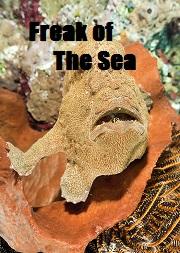 Freak of The Sea
