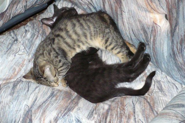 malí kočkouni