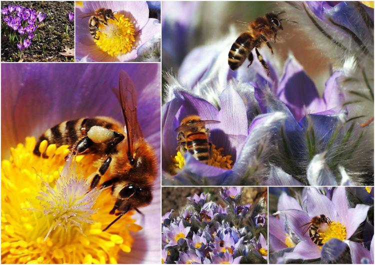 Včely, nebo Fčely?