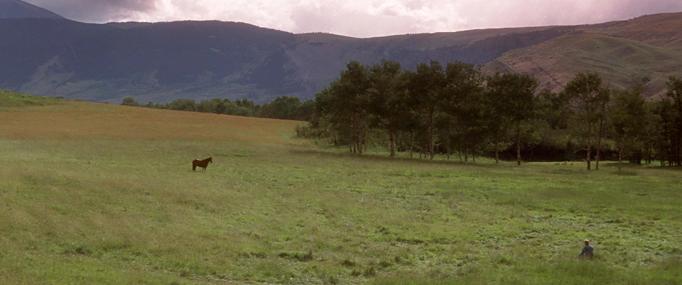 Zarikavac koni