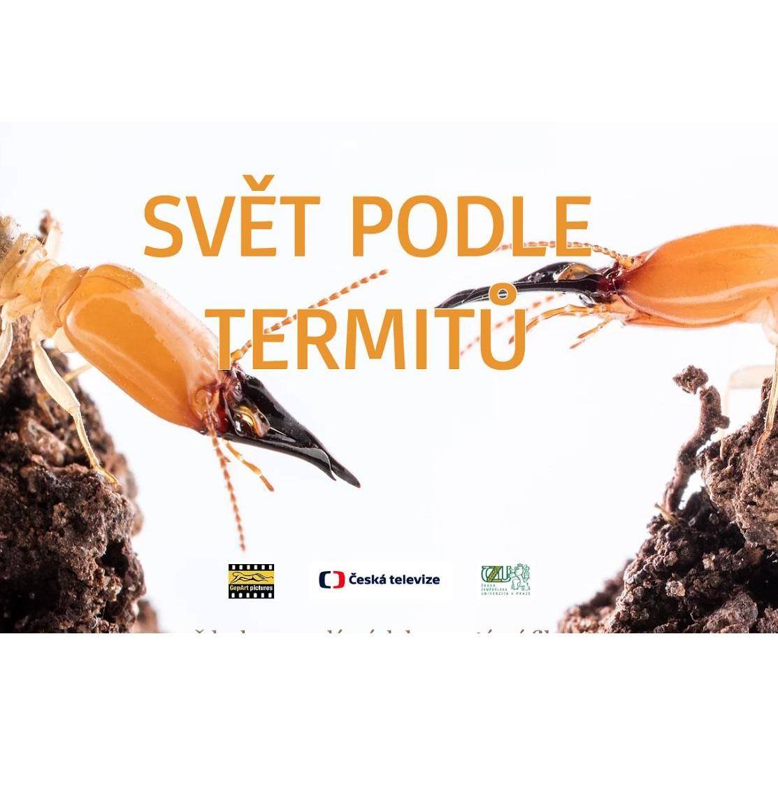 Svět podle termitů